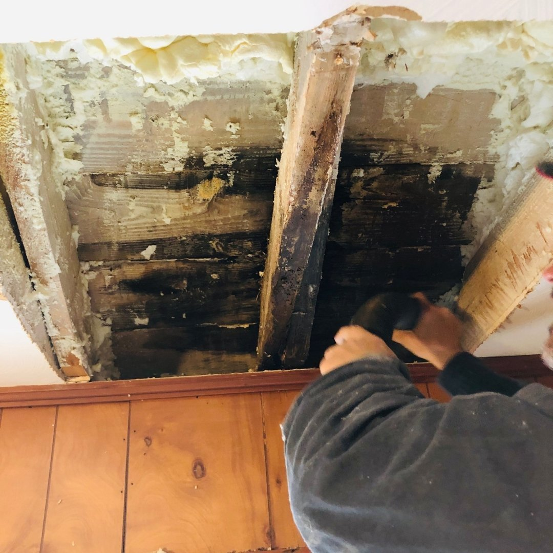 Mold Discovery - Gallery